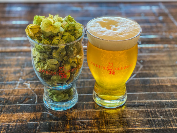 Picture of an IPA in a glass next to a glass full of hops